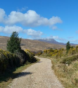 Track Leading to Lough Inshagh